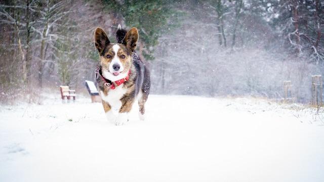 Eksperts skaidro: kā padarīt pastaigu ar suni drošu arī salā