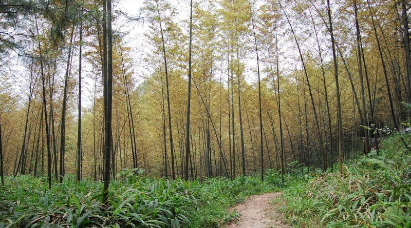 Mežu nozare paraksta sadarbības memorandu ar mērķi kāpināt bioekonomikas īpatsvaru Latvijas tautsaimniecībā